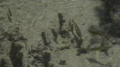 Fishes Ticino River Stock Footage