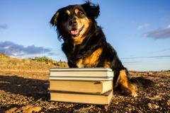 One intelligent black dog reading a book Stock Photos
