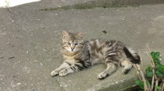 Cat resting on the sidewalk in the shade Stock Footage