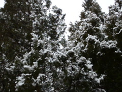 Snow in January. Related clips are in my portfolio in 1920x1080. Stock Footage