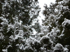 White snowflakes. Related clips are in my portfolio in 1920x1080. Stock Footage