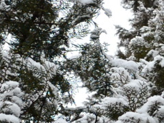 Beautiful snow. Related clips are in my portfolio in 1920x1080. Stock Footage