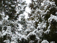 Winter and snow. Related clips are in my portfolio in 1920x1080. Stock Footage