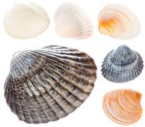 Sea Cockleshell Isolated On White Background Set Collage Collect Stock Photos