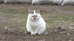 White cat sitting on dry grass in winter, animal, 4к Stock Footage