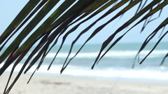 Palm Leaf with Sea Behind and Focus Pull Stock Footage