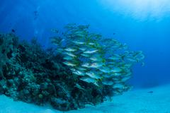 Caribbean Reef and School of Fish Stock Photos