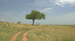 AERIAL: Solitaire tree in African safari Stock Footage