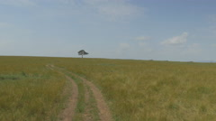 Driving through African safari towards lonely tree Stock Footage