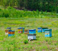 forest bee garden - stock photo