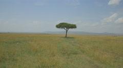 AERIAL: Solitude tree in African savannah - stock footage