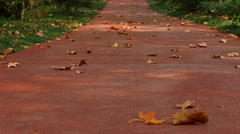 Yellow leaves falling on the woods greenway in Autumn Stock Footage