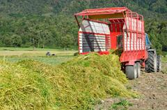 harvesting triticale for silage - stock photo