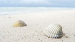 Shells on white beach sand by the sea Stock Footage