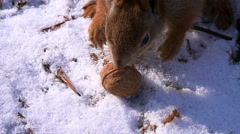 Stock Video Footage of Cute Squirrel Taking Walnut and Escaping in Winter Forest
