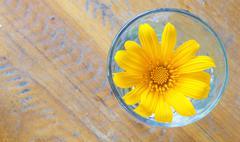 Mexican sunflower weed (tithonia diversifolia) Stock Photos