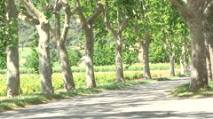 CAR ALONG TREE-LINED AVENUE, VAR, SOUTH OF FRANCE Stock Footage