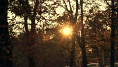 Sun flare through trees in park during autumn  HD Stock Footage