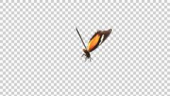 Butterfly - 02 L - Lacewing - Large - Round Flying Loop - Alpha Stock Footage