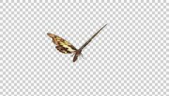 Butterfly - 06 L - Yellow Swallowtail - Large - Round Flying Loop - Alpha Stock Footage