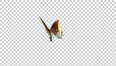 Butterfly - 07 L - Two Tailed Pasha - Large - Round Fly Loop - Alpha Stock Footage