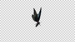 Butterfly - 09 L - Marble Swallowtail - Large - Round Flying Loop - Alpha Stock Footage