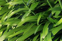 Background with plants with long green leaves Stock Photos