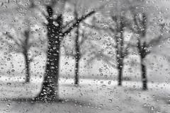 Winter park with tree silhouette through the raindrops in a snowstorm Stock Photos