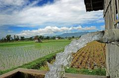 Irrigating rice fields belonging to farmers - stock photo