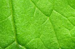 detail texture of green leaf, nature background. - stock photo