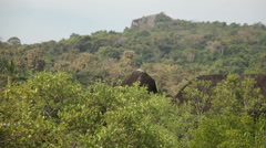 View of the jungle in India in Goa Stock Footage