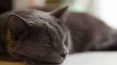 Gray cat sleeping on window Stock Footage