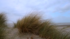Close up of sand dunes and seagrass Stock Footage