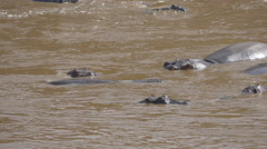SLOW MOTION: Hippos in the river in Masai Mara Stock Footage