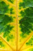 Stock Photo of fall green yellow leaf, nice decoration texture.