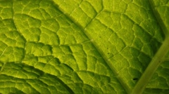 Pan motion across green leaf background. Macro closeup. Stock Footage