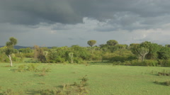 AERIAL: Beautiful green landscape and cactus trees in Africa Stock Footage