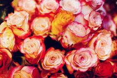 abstract pink rose flowers - stock photo