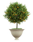 classic vase with small orange tree  - 3d rendering - stock illustration