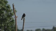 Beautiful brown little bird rest nature tree wait hunt food summer day wildlife  Stock Footage