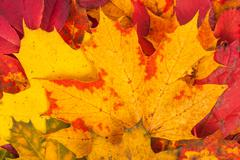 background made of fallen autumn leaves - stock photo