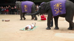 Young woman at the show of elephants in Thailand Stock Footage
