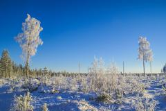Snow-covered trees Stock Photos