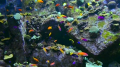 colorful fishes near rock - stock footage