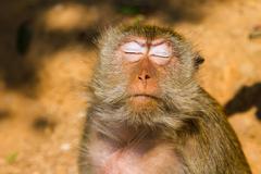 monkey on the island ko lan, thailand - stock photo