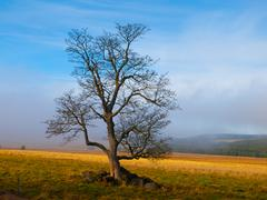 Solitary tree in autumn time Stock Photos