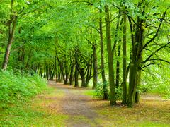 Stock Photo of park road in greenery