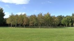 Memorial trees in the Bois de la Paix (Wood of Peace) near Bastogne, Belgium. Stock Footage