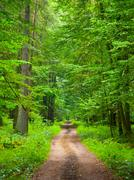 endless forest road - stock photo