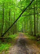 Endless forest road Stock Photos